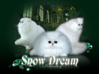 snow-dreams.ru